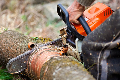 Tree services Duluth