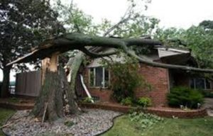 Local Emergency Tree Company Milton