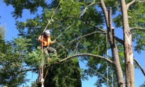 Alpharetta Tree Removal