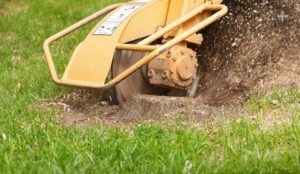 stump removal cost