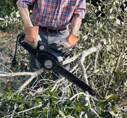 tree pruning and cleaning