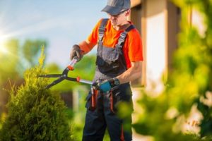 Milton tree trimming service