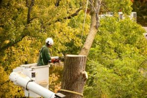 tree services Alpharetta