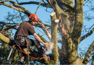 Tree Branch Trimming