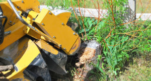 Affordable Stump Grinding Service Alpharetta