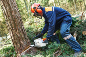 Milton cutting trees