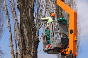 tree cutting cost